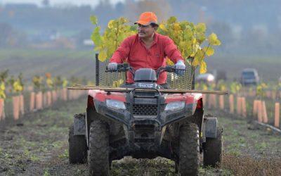 In Oregon hazelnut country, tariffs unsettling