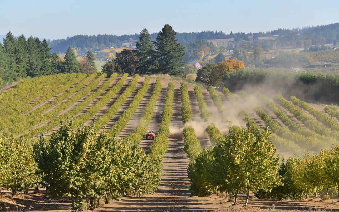 Hazelnut Harvest