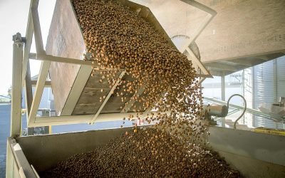 Oregon Hazelnut Industry Growth Continues