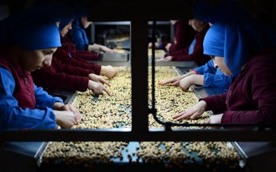 Turkey Earns Some $1.18B in Hazelnut Exports in 7 Months