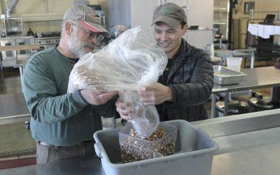 Hazelnut Growers Go Organic