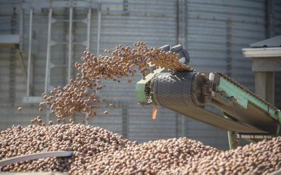 Minimum Hazelnut Price Jumps to 83 Cents Per Pound