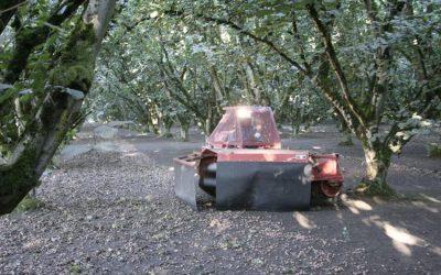 Oregon Hazelnut Growers Look to Penetrate New Export Markets