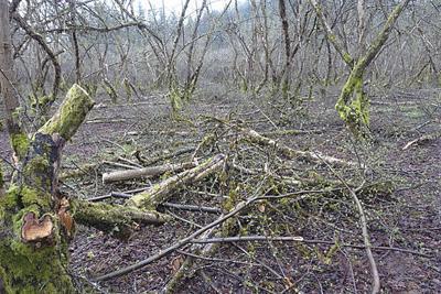 hazelnut orchard damage