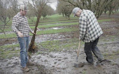 Family Has Deep Roots in Hazelnut Industry