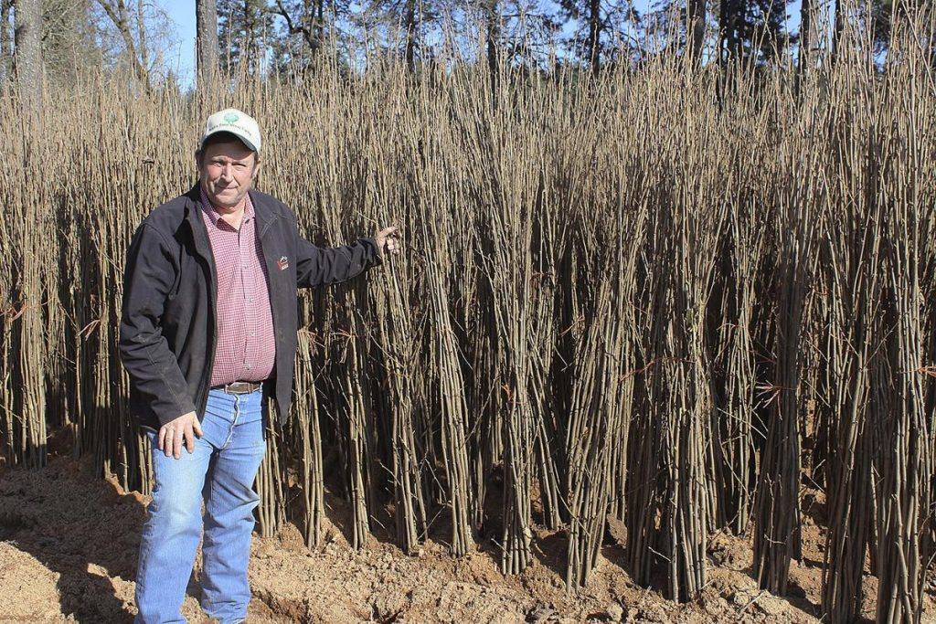 Family Has Deep Roots in Hazelnut Industry