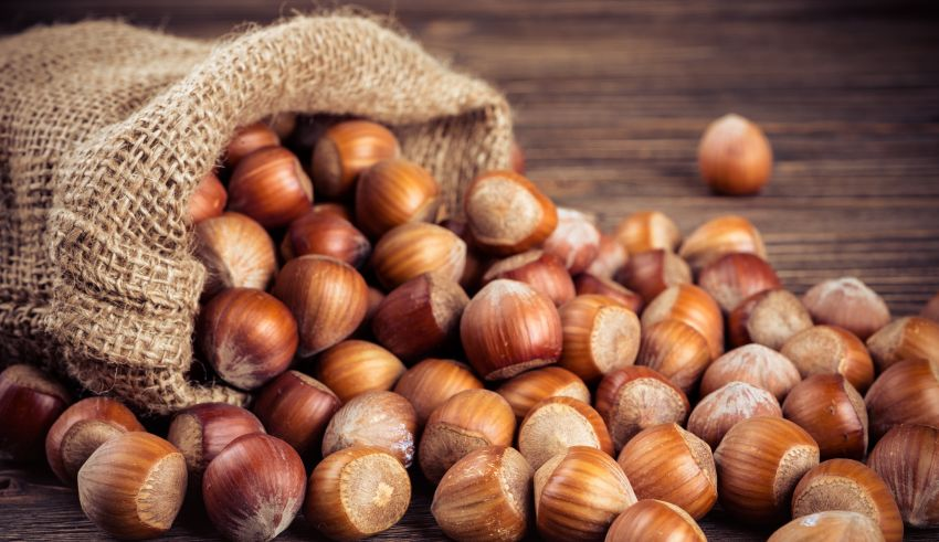 Hazelnut Marketing Board Projects Record Crop in Oregon